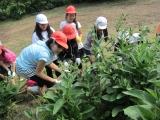 清掃ボランティア  (H24) 6月17.JPG