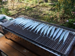 秋刀魚の塩焼き1.JPG