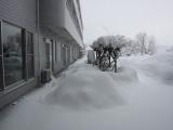 雪像づくり1 25.2.1.JPG