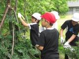 H25 清掃ボランティア 6月 10.JPG