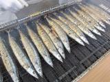 H25 秋刀魚の塩焼き3.JPG
